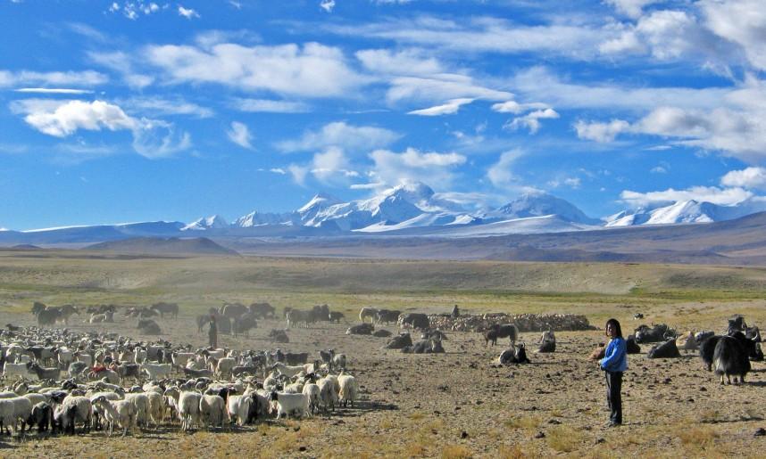 tibet_haut_plateau_tibetain_en_fond_le_shisha-pamgma_8012m_face_nord-est