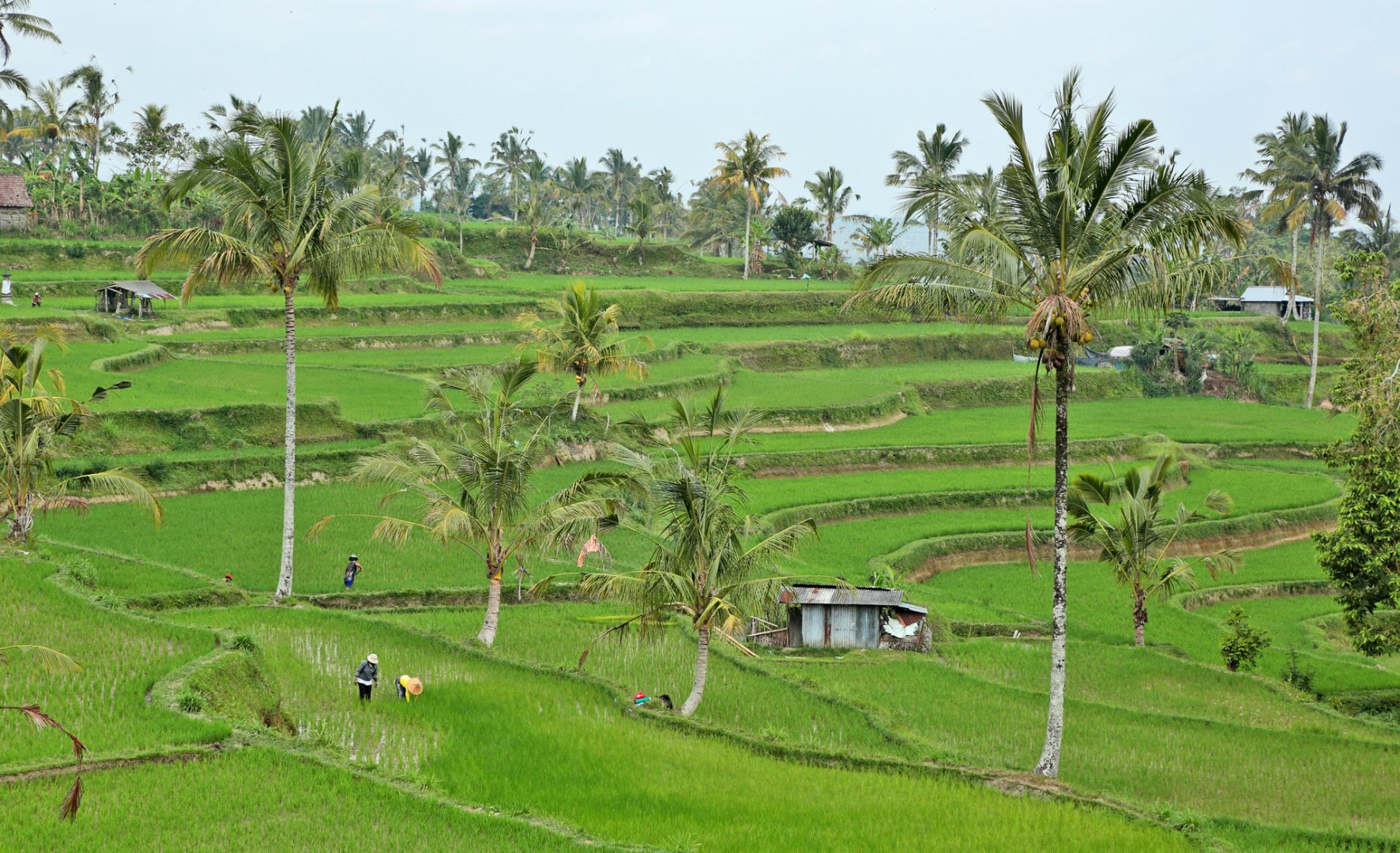Bali_rizieres_en_etages