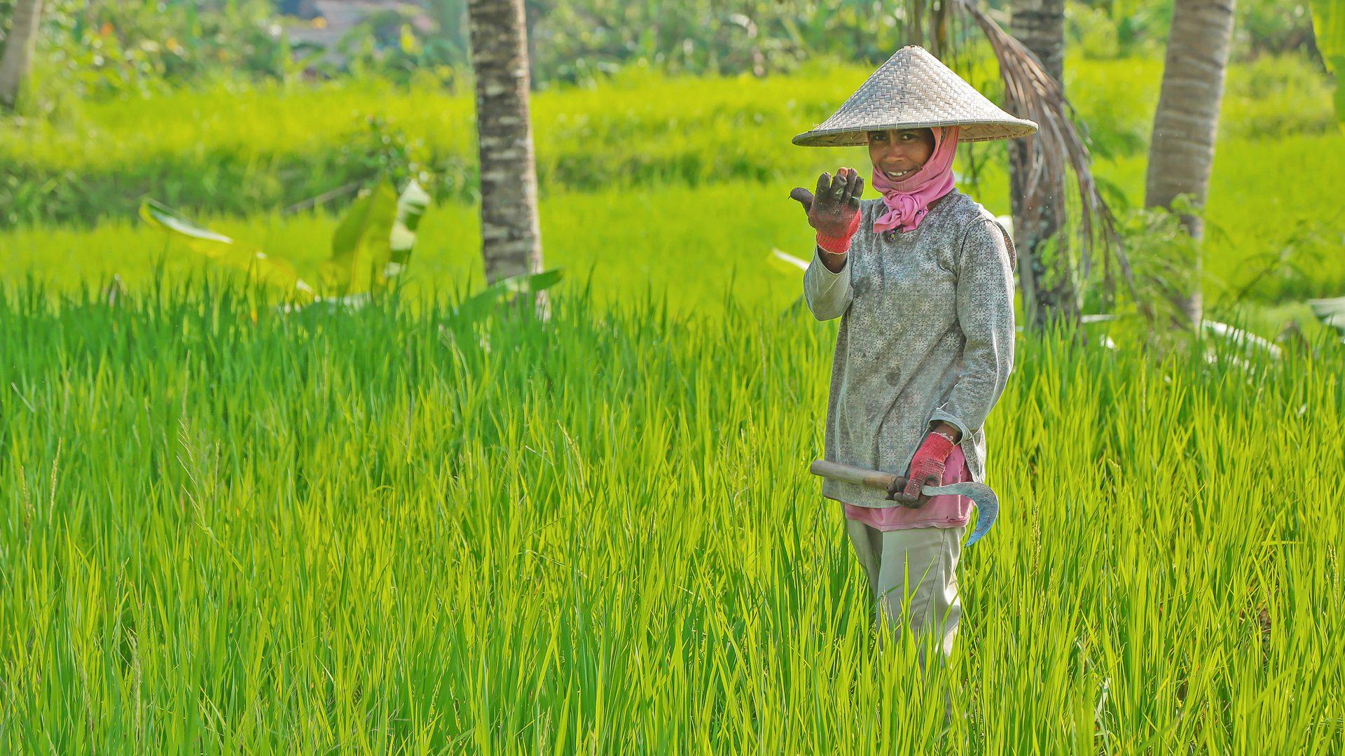 Bali_travailleuse_des_risieres